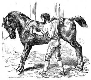 Le Cheval et le Palefrenier - gravure d'Harrison Weir